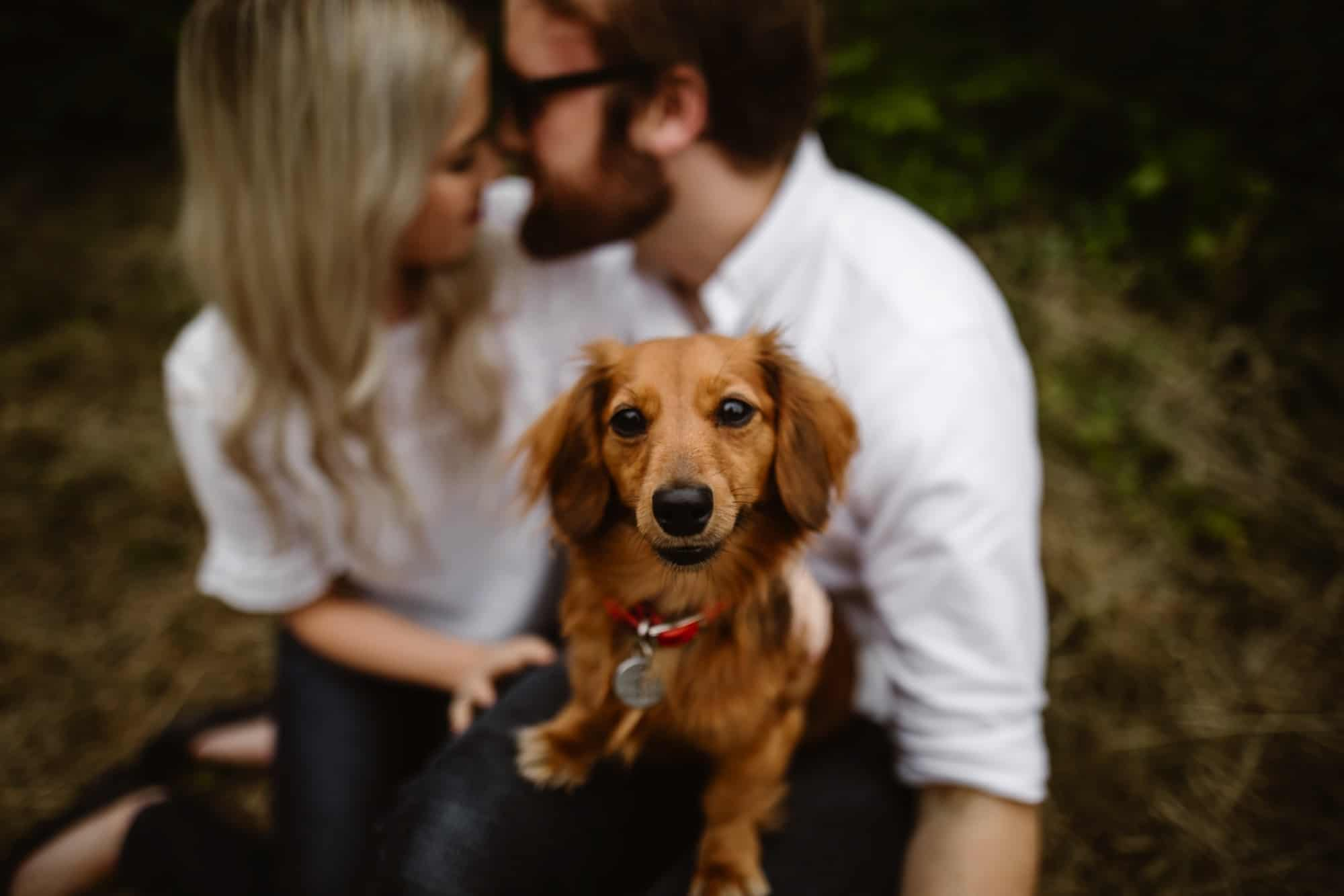 Engagement shoot photo of Dog sat on the couples knee in focus whilst they are in background